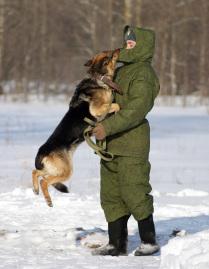Собачьи нежности