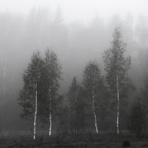 Леса густые высокие