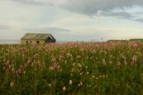 Розовый север