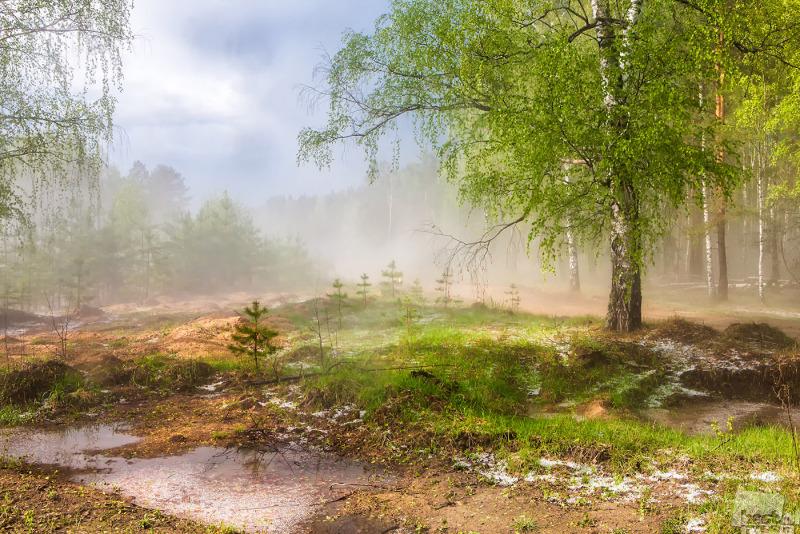 Весенний лес после грозы