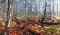 Расколдованный лес