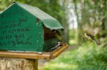 птичье неравенство