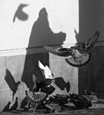 Кормящая голубей